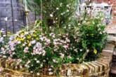 garden200x200